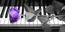 roos-op-piano